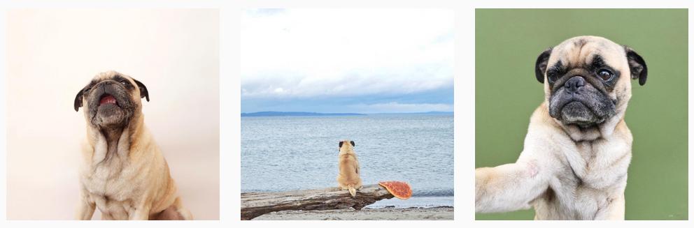 pug instagram